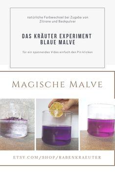 Die Blüten der blauen Malve färben kaltes Wasser intensiv violett. Bei Zugabe von Zitrone verfärbt sich die Flüssigkeit pink, bei Zugabe von Backpulver blau. Das Experiment, Etsy Handmade, Messages, Gift Ideas, Group, Pink, Gifts, Natural Medicine, Baking Soda