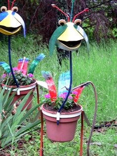 Emu planters - a group of emus is called a 'mob!'