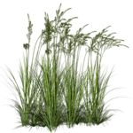 Kissclipart offers about 1200 Grass transparent png images & cliparts. You can filter Grass images by transparent, by license and by color. Architecture Graphics, Landscape Architecture, Landscape Design, Garden Design, Water Plants, Cool Plants, Photoshop Elements, Photomontage, Cut Out Photoshop
