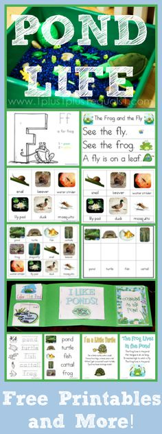 Pond Theme Printables, Sensory Bin, Books, & More