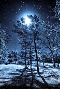 """""""The winter sky above us was shining in moonlight, and everywhere around us the silence of midnight, and we had gathered snowflakes; remember the soft light of starlight on snow. Winter Szenen, Winter Night, Winter Moon, Winter Blue, Winter Trees, Snow Night, Clear Winter, Snowy Trees, Winter Magic"""