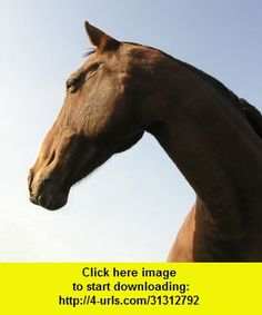 Horsemanship, iphone, ipad, ipod touch, itouch, itunes, appstore, torrent, downloads, rapidshare, megaupload, fileserve