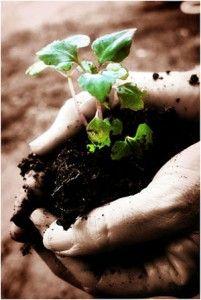 El calentamiento global demanda acciones locales - Noticias de ecologia y medio ambiente | Noticias de ecologia y medio ambiente