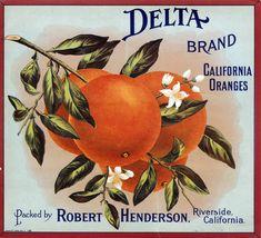 california oranges...decorations, placecards, ???