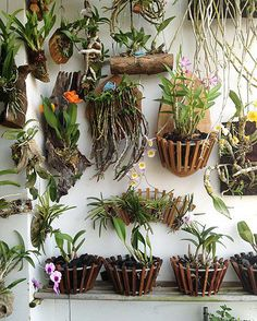 Orchidmate is proud to have the most comprehensive collection of wood orchid baskets in the market. Wholesale, retail and contract manufacturing. Orchids Garden, Orchid Plants, Succulents Garden, Air Plants, Garden Plants, Indoor Plants, House Plants, Flowers Garden, Bonsai