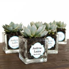 Mini Square Glass Succulent Favor. Prefect guest gift for any celebration.
