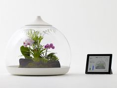 Terrarium floral controlado desde el teléfono