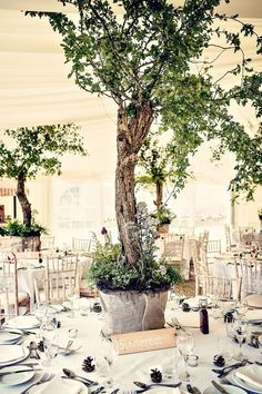 The Trees. We grew wild flowers and herbs round the bace of the trees and put battery operated wire fairy lights in the trees which looked amazing later on in the evening. Round Table Centerpieces, Wedding Centerpieces, Wedding Decorations, Centrepiece Ideas, Marquee Decoration, Decoration Table, Herb Wedding, Garden Wedding, Forest Wedding