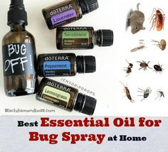 What are essential oils good for pest control? Here are best essential oil for bug spray at home to repel mosquitoes, spider, and bedbug away from your home