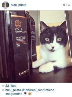 Throwback to when rising artist, Nick Pilato, shared this gem. #TrovareTabarrini #Tabarrini #wine #Grimaldesco #cats