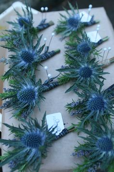 Blue thistle buttonholes with tartan ribbon