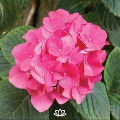 Cuando plantas una semilla de amor eres tú quien florece - Ma Jaya Sati Bhagavati.