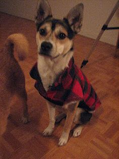 Do it yourself dog coat + a fabulous blog from one of my closest friends!