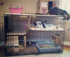 Great way to convert an XL dog crate into a rabbit's home. #bunny #rabbit #bunnies #cuteanimal #pet