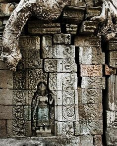 This amazing detail was captured in Cambodia at the Angkor Wat temple complex. Notice how the tree has taken on the colour of the temple ruin (or is it the other way round?) and seems to be part of the structure, like a giant snake peeking down from the top.