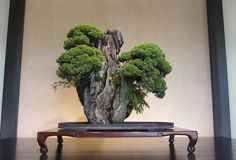 An absolutely stunning work of art, this Juniper Bonsai rock landscape was on display at the Omiya Bonsai Art museum.
