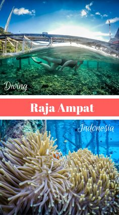 Raja Ampat Islands- Guide to Paradise. Raja Ampat's name comes from a local myth of a woman who finds seven eggs. Four of the seven eggs hatch and become kinds that occupy four of Raja Ampat's main islands while the other three become a ghost, a woman, and a stone. Click to read more at http://www.divergenttravelers.com/raja-ampat-islands-indonesia/