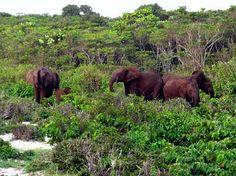Loango National Park, Gabon, with forest elephants.