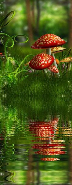 Beautiful fairy forest reflection.