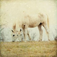Surreal Nature Photograph Dreamy White Horse by TheShutterbugEye