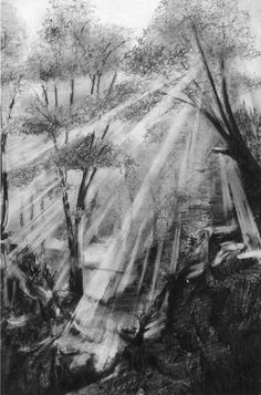 Pencil Sketches Of trees | 30+ Pencil Sketches That Take Drawing to New Extremes I need to remember the light rays by erasing long lines