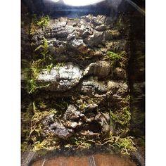 Reptile Room, Reptile Terrarium, Crested Gecko, Dart Frogs, Amazing Decor, Vivarium, Reptiles And Amphibians, Aquariums, Spiders