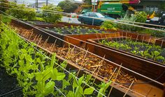 Front lawn garden project idea that came from a Portland, Oregon neighborhood project. Compost, Potager Bio, Home Vegetable Garden, Green Lawn, Garden Boxes, Urban Farming, Garden Spaces, Cool Plants, Lawn And Garden