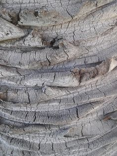 Palm Tree Bark with rough textures in dusty grey tones; organic pattern inspiration; natural texture source