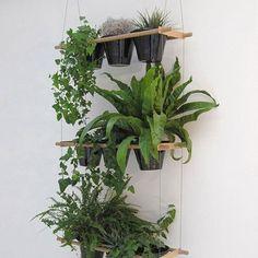 Suspension étagères de verdure.