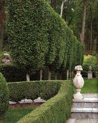(via garden architecture II / boxwood hedge) Tall trees good privacy for down si. (via garden arch Love Garden, Garden Pool, Dream Garden, Garden Landscaping, Manor Garden, Privacy Landscaping, Fence Garden, Cottage Gardens, Shade Garden