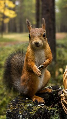 There are lots of squirrel like mammals like the ground hog, gopher as well as prairie dog. When it comes to foods, what do squirrel love to eat? Forest Animals, Nature Animals, Woodland Animals, Animals And Pets, Baby Animals, Funny Animals, Cute Animals, Wild Animals, Funny Squirrel Pictures