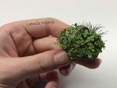 Individual plants - Lamis Minis