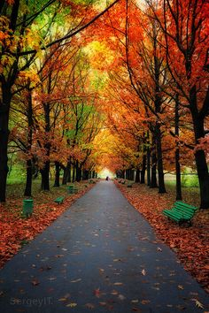~~Autumn trees in park with colorful leaves by Sergiy Trofimov~~
