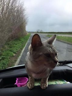 FOUND-Ambleside. We don't recommend our customers go to these measures to get to Hayes Garden World. Stowaway cat found its way into the back of one of our delivery vans when it was in the area of Basingstoke, Sandhurst, Oxfordshire, London and Bucks. We need facebook power to reunite it with its owners so pleaseRead More