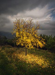 Half of autumn
