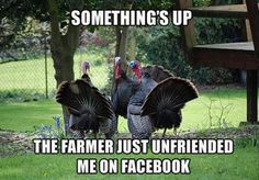 Thanksgiving humor!! Turkey #quote and worry.  #HappyThanksgiving