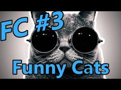FC - Funny Cats #3 -  #animals #animal #pet #cat #cats #cute #pets #animales #tagsforlikes #catlover #funnycats The new edition of Funny Cats VIdeo.Tak really lasts all day cat year, because it sierściuchy rule the world. Do not believe me? See another cat compilation. Komentujcie, łapkujcie and do not forget to... - #Cats