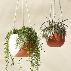 How To Start an Indoor House Plant Garden | To help make your indoor gardening endeavors a whole lot easier, we've rounded up some practical products and expert tips to channel your inner green thumb.