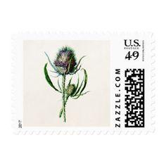 Vintage 1902 Old Scottish Thistle Wild Flower Postage #postage #stamps #customstamps #mail #invites #letters #postage #postage stamp