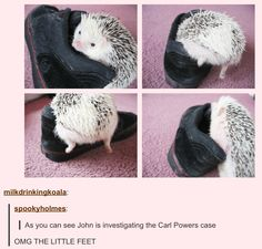 From now all all hedgehogs will be related to Jawn. I can't even... I wonder where the whole thing even started? I mean other than the obvious fact that Martin Freeman is a hedgehog.