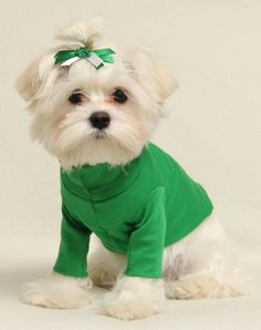 Bright Green Turtleneck Shirt and Bow