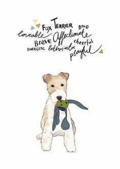 ♥♥FOX TERRIER Bold_Loveable_Brave_Affectionate_Energetic_Enthusiastic_Cheerful_Playful♥♥