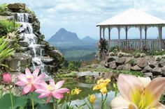 Garden Entry and Devonshire Tea - For 2, Maleny, Sunshine Coast QLD | RedBalloon
