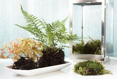 Easy Decorating Projects: Terrarium Ideas — Live.Love.Home