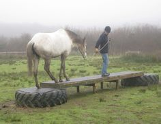 mountain trail courses for horses - Google Search