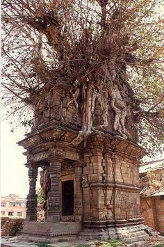 Abandoned In Ruins Crypt Overrun By A Tree, In Katmandu, Nepal Check us out on Fb- Unique Intuitions Abandoned Buildings, Abandoned Mansions, Old Buildings, Abandoned Places, Haunted Places, Spooky Places, Ancient Architecture, Drawing Architecture, Old Houses
