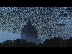 Amazing. Beautiful, creepy, almost alien. I've never seen such large crowds of birds. We have these swarms too, but much smaller.