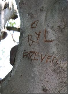 Carve initials in a tree and years later come back to take a wedding photo in front of the tree<3