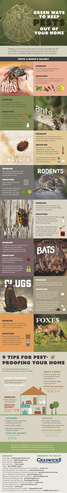 Green Ways To Keep Pests Out Of Your Home