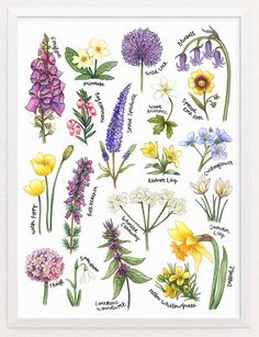 Purple and Yellow Floral Print. Gardening Gifts for Women British Wildflowers Botanical Study Illustrated Print. Wildflower Drawing, Wildflower Tattoo, Illustration Botanique, Illustration Blume, Art Floral, Floral Prints, Botanical Drawings, Botanical Prints, Flower Drawings